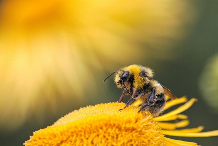 bees pobble quick write