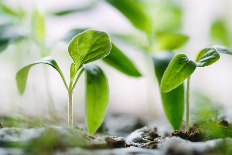 Pobble seeds quick write